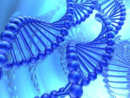 Улучшаем стадо: Chromosomal Mating – генетический подбор пар