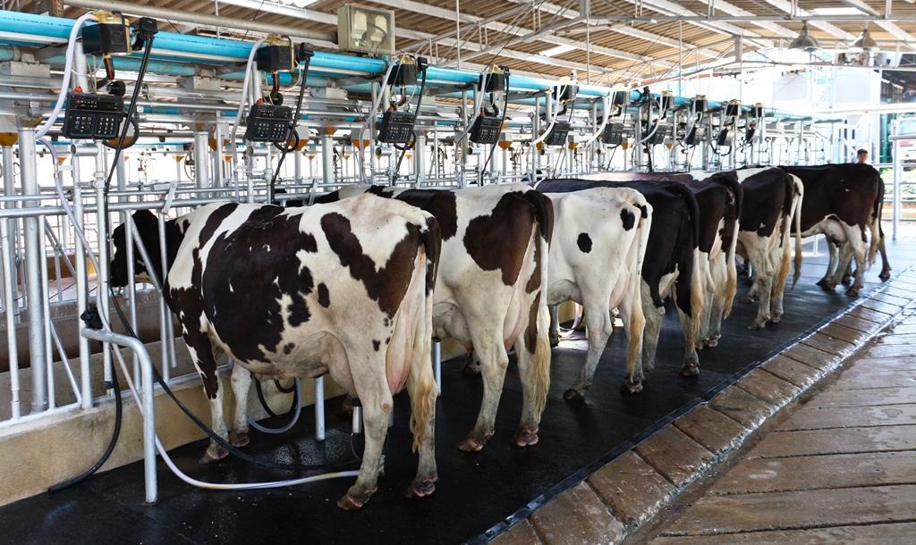"""Гендиректор """"Союзмолоко"""" отметил стабильный прирост производства сырого молока в НСО"""