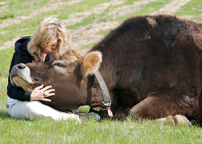 Тренды: ферма для обнимания коров