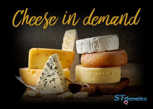 Молоко каких коров лучше всего подходит для производства сыра?