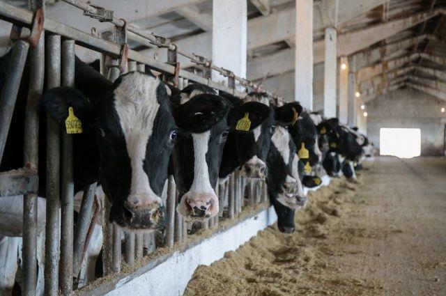 В России появится национальная система учета и идентификации сельскохозяйственных животных
